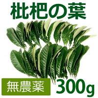 無農薬枇杷の葉(びわの葉)300g(枇杷の生葉30枚〜40枚)【長崎・大分県産】枇杷葉毎週2回入荷※同梱不可