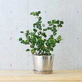 plectaフラワーポットセット植木鉢Φ120