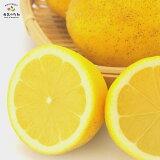 訳あり 国産 レモン 5kg れもん 愛媛県産 減農薬 栽培