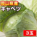 吉備高原の安全、安心、美味しい野菜【岡山産】キャベツ3玉・吉備高原のキャベツ