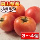 【岡山県産】 とまと 【トマト】