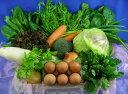 吉備高原の農家で生産されたお野菜と卵【吉備高原農家の野菜】卵セット