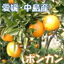 ポンカン 10kg 家庭用 サイズ込希望の島 愛媛 中島産