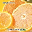 【訳あり】希望の島 完熟春みかん(カラマンダリン) 2kg サイズ込 愛媛 中島産