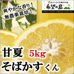 愛媛・中島産有機栽培・無農薬『甘夏』そばかすくん