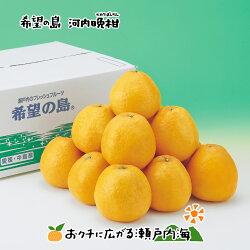 河内晩柑(かわちばんかん)家庭用8kg