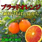国産ブラッドオレンジ(タロッコ) 家庭用 サイズ込 3kg 愛媛 中島産【希望の島 blood orange】