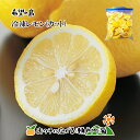 希望の島 国産レモン 500g 残留農薬ゼロ 冷凍レモン【カ