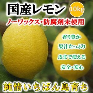 【あす楽】国産レモン 10kg 残...