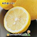 【訳あり】希望の島 国産レモン 3kg 残留農薬ゼログリーンレモン ユーレカレモン 国産 愛媛 中島産