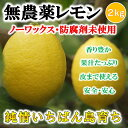 無農薬レモン 国産レモン 愛媛・中島産 2kg【希望の島 レモン 国産 無農薬】ノーワックス・…