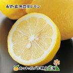 希望の島 無農薬レモン 2kg サイズ込 愛媛 中島産イエローレモン ユーレカレモン 国産レモン 無農薬