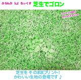 【50cm単位販売】ぷらんぷ ちいくす 芝生でゴロン10番キャンバス 05P03Sep16