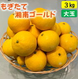 もぎたて 湘南ゴールド オレンジ 3kg 湯河原産