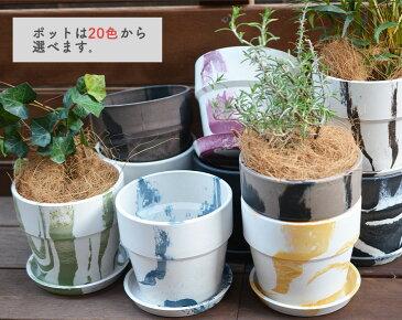 ラベンダー 観葉植物 ミニ観葉植物 4号鉢 選べる鉢 鉢植え セット ポッシュリビング アーバンプランツポット インテリア プレゼント おしゃれ ナチュラル 母の日
