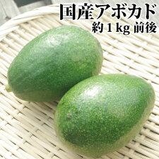 【国産】愛媛吉田町産アボカド約1kg(小〜中玉5〜6個)【ベーコン種】