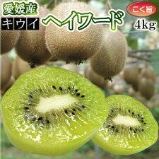愛媛産キウイフルーツ