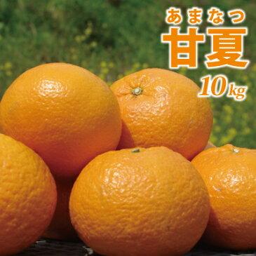 愛媛産 甘夏10kg(あまなつ)(L〜3L混合)甘酸っぱい初夏のフルーツ