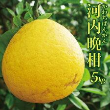 河内晩柑家庭用5kg