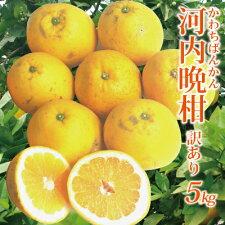【送料無料】吉田町産・わけあり河内晩柑5kg