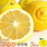 【1月15日より発送】愛媛産 贈答はるか5kg 超低刺激、淡白な味。
