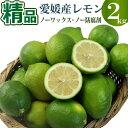 愛媛県産グリーンレモン2kg 精品【ノーワックス】【ノー防腐...