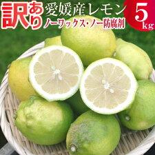 わけありレモン5キロ