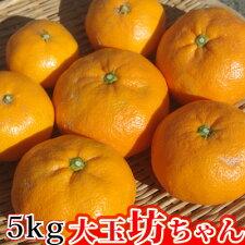 大玉坊ちゃん5kg