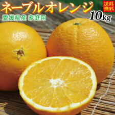 【送料無料】愛媛産ネーブルオレンジ10kg(精品:M〜3Lサイズ込み)(北海道、沖縄県送料別途)甘さ際立つネーブルです。