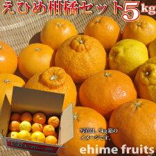 きなはいや柑橘セット