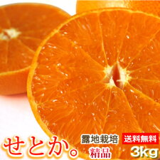 【送料無料】【愛媛産】露地栽培せとか3kg