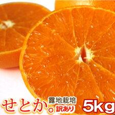 【送料無料】【愛媛産】ワケアリ露地栽培せとか5kg