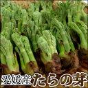 ※収穫後すぐ発送の為、発送日指定不可【愛媛産】たらの芽 1kg(100g×10パック)