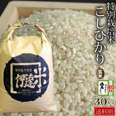 特別栽培米こしひかり玄米