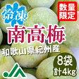 氷梅 冷凍南高梅(梅酒用・梅ジュース用) 4kg(500g×8袋) ☆和歌山県紀州産青梅 冷凍梅