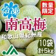 氷梅 冷凍南高梅(梅酒用・梅ジュース用) 5kg(500g×10袋) ☆和歌山県紀州産青梅 冷凍梅
