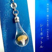 クラゲminiチャーム01-10(シーネットル)cha-kurage01-10-6
