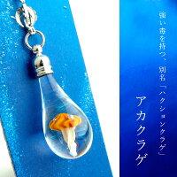 クラゲminiチャーム01-7(アカクラゲ)cha-kurage01-7-6