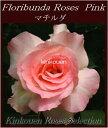 《バラ苗》《鉢花》《四季咲き》《園芸》《ガーデニング》□ バラ F桃マチルダ18cmLポット