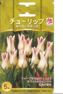 《球根》《ガーデニング》《園芸》《春咲き》《コンテナガーデン》□ A-02 チューリップホーラ...