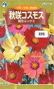 【代引不可】【送料5袋まで80円】 □秋咲コスモス 初恋ミッ