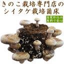【国産乾燥キクラゲ(20g)セット】しいたけ 栽培キット 菌...