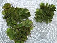 オオサンショウモ5株セット/大山椒藻水草