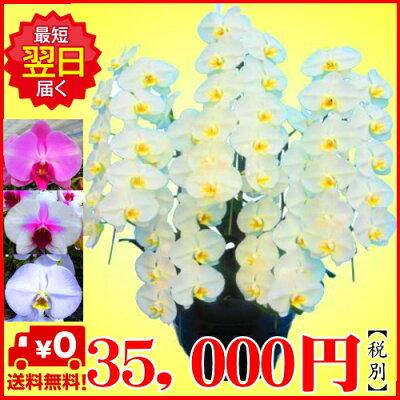 35,000円税別