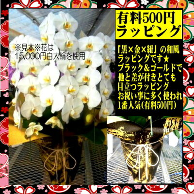 ○有料500円【黒和風】黒×金×紐