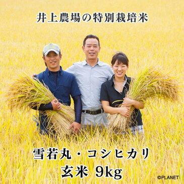 庄内米 山形県鶴岡市 井上農場の特別栽培米【雪若丸】【コシヒカリ】玄米 9kg