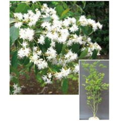 送料無料【オンリーワン】人気の花木をお届けします。オンリーワン 植栽・ベーシックプランツ...