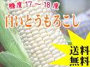 白いとうもろこし【ピュアホワイト】北海道産直!朝もぎ、とうきび【10本】限定販売!生でも美味しいフルーツトウモロコシ♪産地直送トウキビ【21%OFF】送料無料!※8月中旬頃より収穫出来次第、順次発送となります
