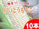 白いとうもろこし【ピュアホワイト】北海道産直!朝もぎ、とうき...
