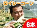 ロイシーコーン【白いとうもろこし】北海道産直!朝もぎ、とうきび【6本】生でも美味しいフルーツトウモロ...
